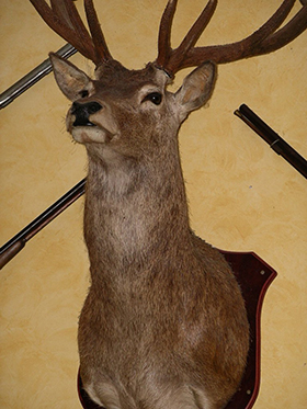 "Made in America, or ""The Taxidermist that Wasn't"""
